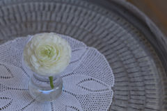 White ranunculus flower in glass of water on metal tray Royalty Free Stock Photo