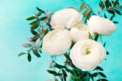 White ranunculus flowers in vase Blue background Stock Photo