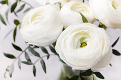 White ranunculus flowers in vase Grey background Royalty Free Stock Images