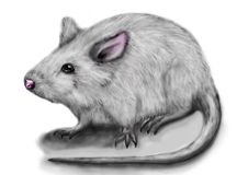 White rat Royalty Free Stock Images