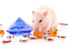 White rat with gems Stock Image