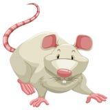 White rat Royalty Free Stock Image