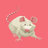 White rat on pink Royalty Free Stock Images