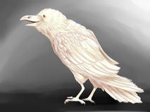 White raven. Digital drawing of white albino raven on grey background royalty free illustration