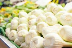 White raw and fresh fennel bulbs heap Stock Photos