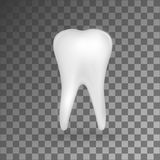 White realistic 3d molar on grey background. Vector iilustration Stock Photography