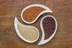White, red and black quinoa grain Royalty Free Stock Image