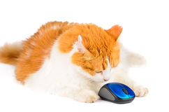 White and red cat and computer mouse Royalty Free Stock Photo