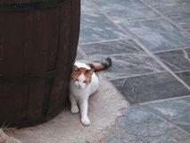 White-red cat near a huge barrel on the street of the Greek city of Rethymnon. stock photo