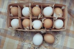 White and red chicken eggs. Top view royalty free stock photo