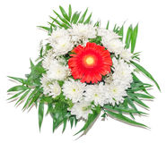 White and red Chrysanthemum flowers, mums or chrysanths Stock Photography