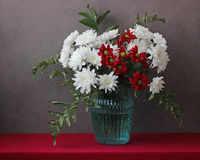 White and red chrysanthemums in a blue vase Stock Image