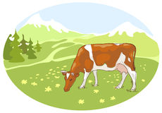 The white and red cow is grazed on a meadow. The white and red cow is grazed on the Alpine meadow. Illustration Stock Illustration