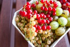 White, red currant and gooseberries royalty free stock photography