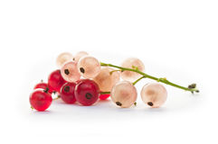 White and red currants Royalty Free Stock Images
