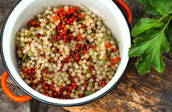 White and red currants. Pan with white and red currants Royalty Free Stock Image