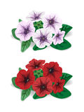 White and red flower bush petunia Royalty Free Stock Photo