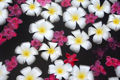 White and red flowers floating in water Royalty Free Stock Photos