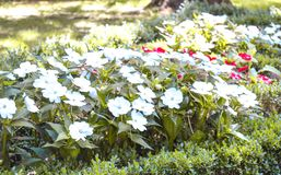 White and red flowers at a park stock photos