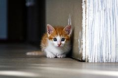 White red kitten sitting on the floor near the wall, looking at the camera with restless eyes. Photo stock photo