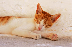 White and red kitten Stock Image