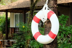 White and red life buoy hanging on tree Royalty Free Stock Images