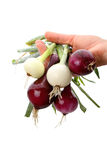 White and red onion Stock Photography