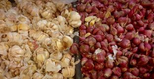 White and red onions Stock Photos