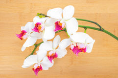 white with red  orchid on bamboo wooden  background Royalty Free Stock Images