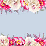 White and red peonies watercolor background on blue Royalty Free Stock Images