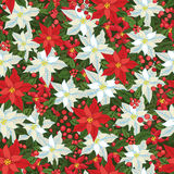 White and Red poinsettia.Christmas seamless Royalty Free Stock Photos