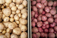 White & Red Potatoes at Farm Market Stock Images