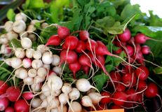 White and Red Radishes at the Farmer's Market Royalty Free Stock Image