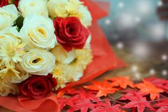 White and red rose in christmas and valentine stock images
