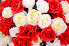 White and red rose flowers background texture. Stock Images