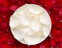 White and red rose petals Stock Photography