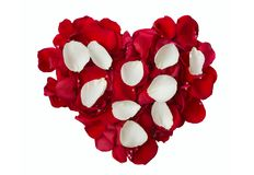 White and red rose petals Stock Image