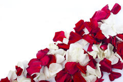 Rose petals. White and red rose petals on white Royalty Free Stock Photography