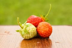 White and red strawberries lie in the sun. Delicious and sweet dessert berry. Vitamins. For your design royalty free stock images