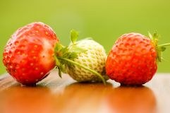 White and red strawberries lie in the sun. Delicious and sweet dessert berry. Vitamins. For your design stock images