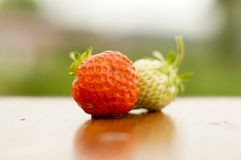 White and red strawberries lie in the sun. Delicious and sweet dessert berry. Vitamins. For your design stock photography