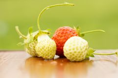 White and red strawberries lie in the sun. Delicious and sweet dessert berry. Vitamins. For your design royalty free stock photo