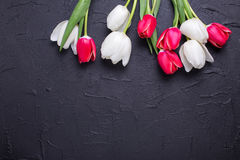 White and red tulips flowers on black textured  background. Selective focus. Place for text. Flat lay Stock Photography