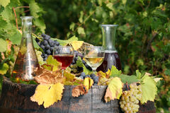 White and red wine. On wooden barrel Royalty Free Stock Image