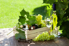 White and red wine bottle, glass, vine and grapes Stock Images