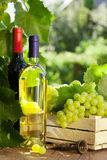 White and red wine bottle, glass, vine and grapes. White and red wine bottle, glass, vine and bunch of grapes on garden table royalty free stock image