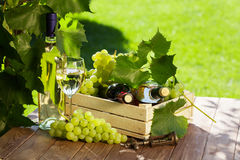 White and red wine bottle, glass, vine and grapes. White and red wine bottle, glass, vine and bunch of grapes on garden table royalty free stock photos