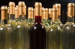 White & Red Wine Bottles. Closeup of full & corked bottles of white wine with one red bottle mixed in Royalty Free Stock Photography