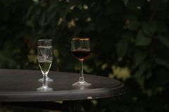 White and red wine in glass background on garden stock image