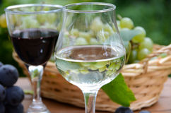 White and red wine with grapes Stock Images